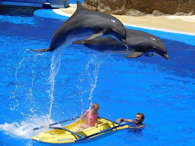 dubai dolphinerium