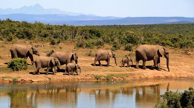 elephant sancturay pattaya
